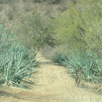 The Magical Mezcal Mystery Tour 10