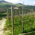 Three Days in the Langhe 20