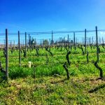 Three Days in the Langhe 16