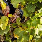 Kruger-Rumpf: Terroir in the Nahe 4