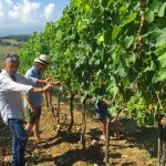 Skurnik Goes to Italy 2016 56