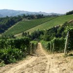 Skurnik Goes to Italy 2016 42