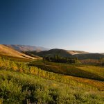 Burn Cottage: Excellence in Biodynamics & Pinot Noir 7