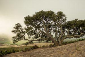 Tectonic Origins: A Glimpse Into Sta. Rita Hills 3
