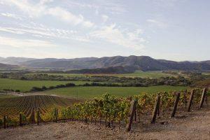 Tectonic Origins: A Glimpse Into Sta. Rita Hills 4