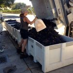 Ceaseless Wild: A Tribute to Grace & the Grenache of California
